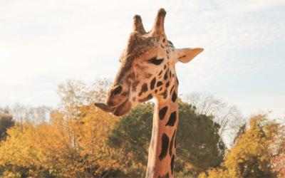 Mogo Wildlife Park opens new veterinary hospital