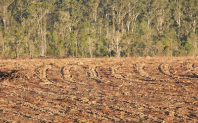 Vets want wildlife better protected from land clearing