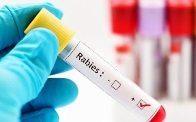 Vets Beyond Borders host World Rabies Day webinar