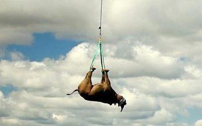 Upside down rhinos
